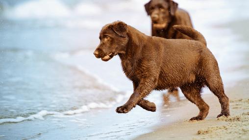 Saúde dos pets: atenção redobrada no verão