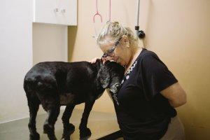 cachorro-velhinho-veterinario-senhora-abracando