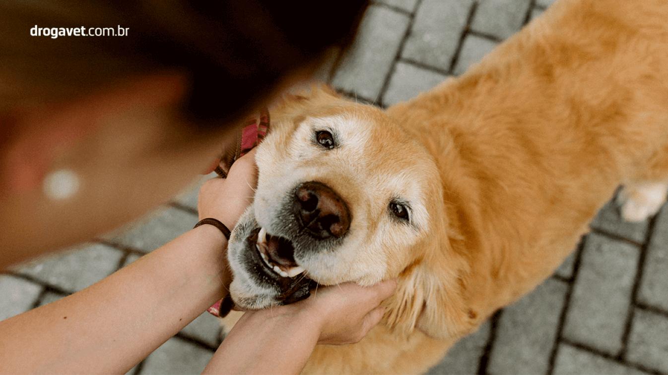 insuficienciarenal-animais-estimação-velhos-tratamento-cuidados-diagnostico-drogavet-manipulacao-veterinaria-saude