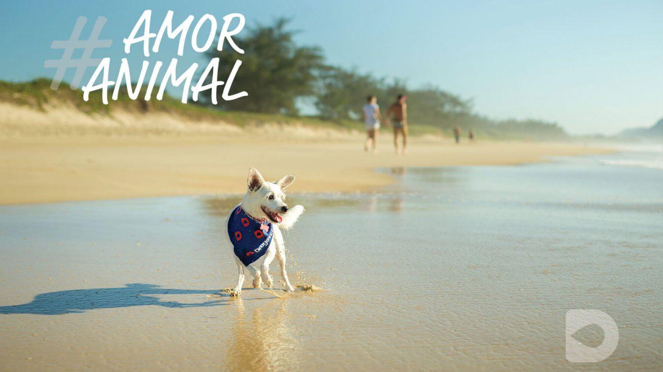 fériascompets-pet-animais-ferias-sorrindo-lugares-petfriendly-passeios-viagem-drogavet-farmacia-manipulacao-veterinaria-turismo