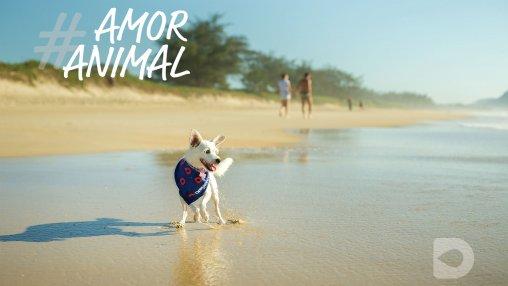 pet-animais-ferias-sorrindo-lugares-petfriendly-passeios-viagem-drogavet-farmacia-manipulacao-veterinaria-turismo