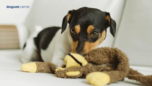 giardia_canina_tratamento_prevenção_drogavet