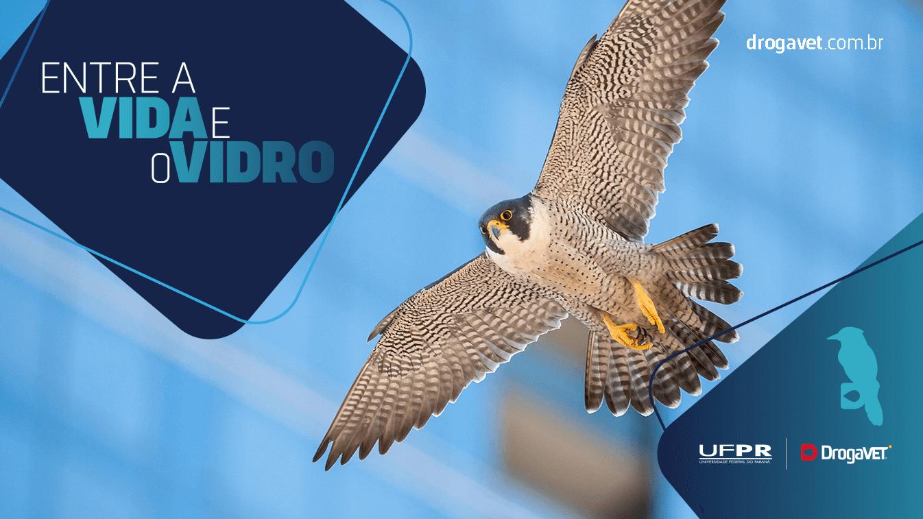 colisões_aves_passaros_choque_vidro_falar_sobre_ufpr-campanha-1346x757