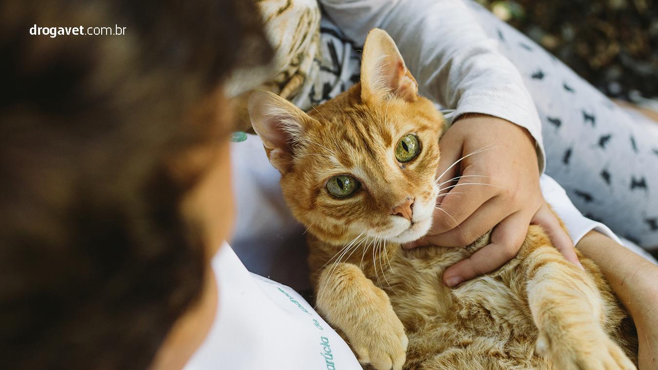 doencas-outono-comuns-gatos-cavalos-droga-vet-1346x757