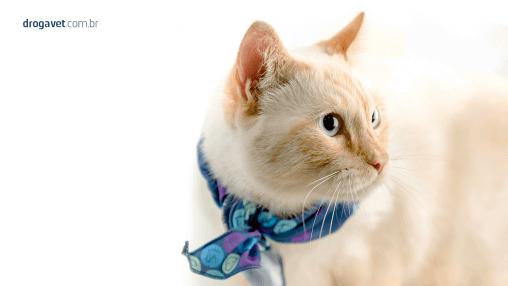 DrogaVET_bronquite_felina_como_tratar_gato