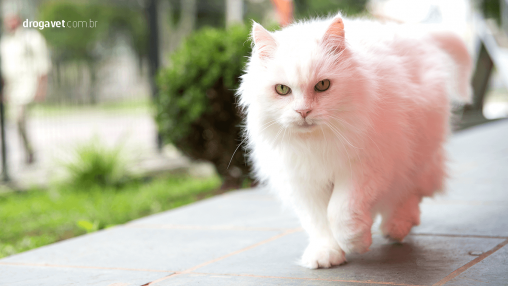 problemas-coluna-gatos-felinos-osseo-articular-droga-vet-1346x757