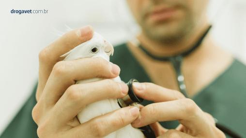drogavet-diminuição-da-mortalidade-de-pássaros-jun18