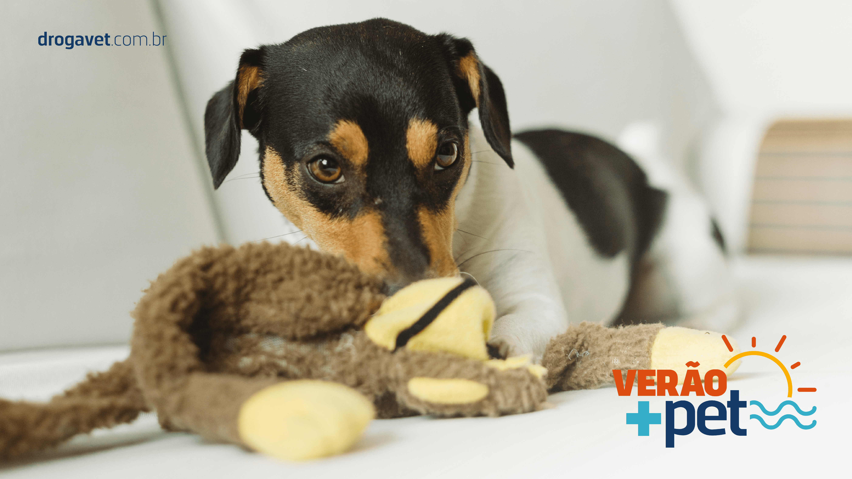 a76c352f756e3d Parvovirose Canina: entenda tudo sobre a doença | DrogaVET